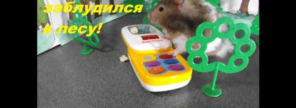 Хомяк заблудился в лесу/Hamster lost in the forest