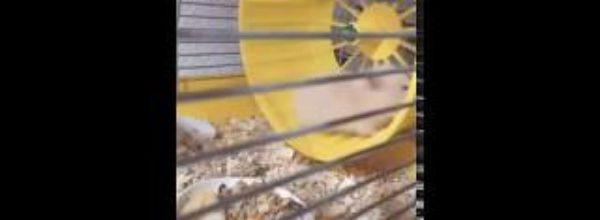 ✧My hamster Snezylya✧