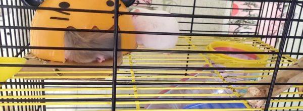 Мой питомец хомяк | Вместительный домик | Хомячуля: Secret Life Hamster – Pets