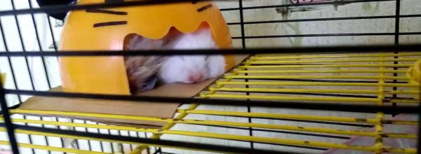 В двоем веселее! Хомяки спят – Hamsters are sleeping | Хомячуля: Secret Life Hamster – Pets