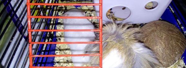 Спаривание хомяков 😊☺☺ Mating hamsters | Хомячуля: Secret Life Hamster – Pets