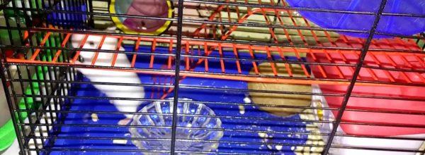 Суета. Хомяк в колесе – Vanity. Hamster in the wheel) | Хомячуля: Secret Life Hamster – Pets