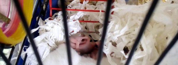 Малыши сирийского хомяка 🐹Hamsters Babies | Хомячуля: Secret Life Hamster – Pets