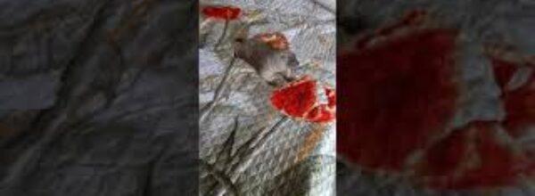 Как Тошка охлаждается# сурок Тошка#marmot#marmot Tosh# cute animal