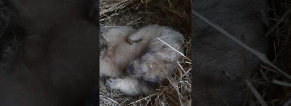 В норе у сурка Тошки#marmot Tosh#cute animals